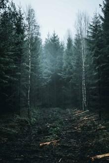 茂密的森林图片大全