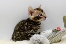 虎斑小猫咪高清图