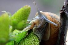 蜗牛局部摄影图片