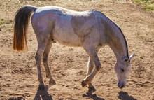 野生马匹高清图片