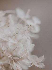 白色花草素材高清图片