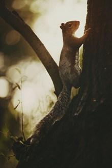 可爱长吻松鼠精美图片