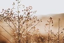 非主流花草摄影图片