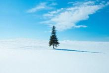 蓝天雪地电脑桌面背景高清图片