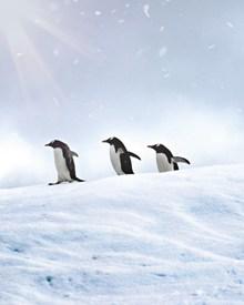 小企鹅萌萌图片大全