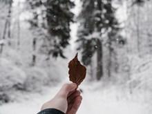 手拿叶子非主流 手拿叶子非主流大全精美图片