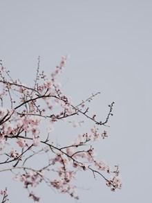春天梅花盛开的高清图片