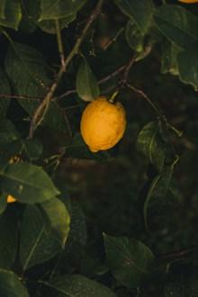 一颗柠檬图片素材