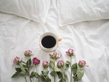 咖啡玫瑰图片素材