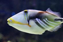 水族馆小鱼观赏精美图片