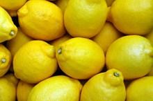 黄色柠檬丰收高清图