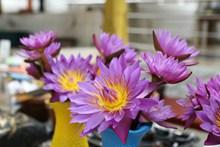 紫色莲花插花高清图片