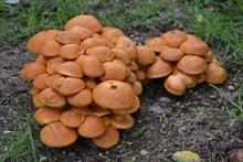 野生蘑菇真菌图片素材