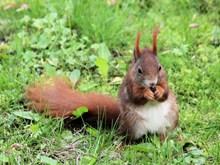 棕色小松鼠可爱精美图片
