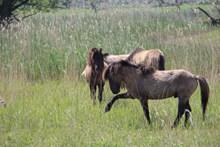 草地野马图片