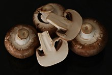 新鲜食用蘑菇图片