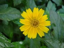 盛开黄色花朵摄影图片素材