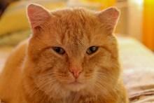呆萌宠物猫肖像图片素材