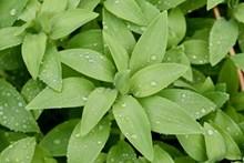 清晨绿色叶子精美图片