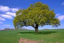 原野绿树高清图片