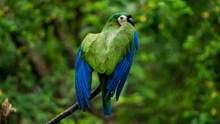 绿色宠物鹦鹉高清图