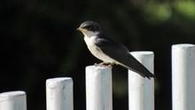 石柱上的小鸟高清图