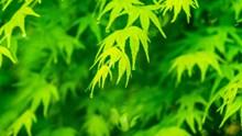 春天绿色树叶壁纸图片素材