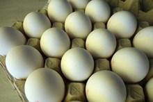 白色鸡蛋图片大全