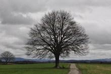 光秃大树图片素材