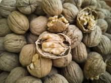 营养核桃坚果图片素材
