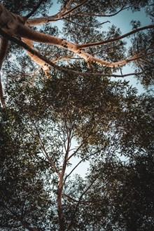 茂密的树叶图片大全