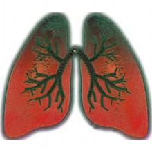 关注肺部健康卡通高清图片
