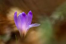 一朵紫色花的图片大全
