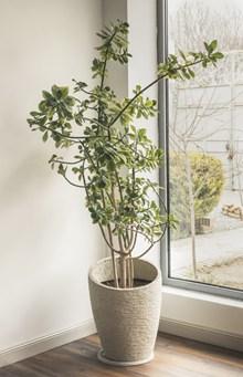 家居盆栽植物图片