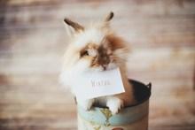 可爱长毛兔图片素材
