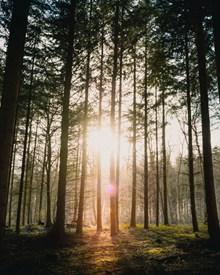 唯美树林逆光摄影图图片大全