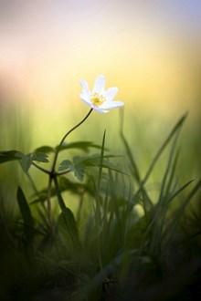 小清新非主流花朵图片大全