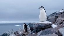 南极企鹅高清高清图