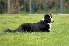黑白色宠物狗精美图片