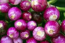 新鲜红皮洋葱精美图片