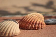 高清沙滩贝壳唯美图片