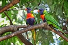 色彩缤纷的鹦鹉图片大全