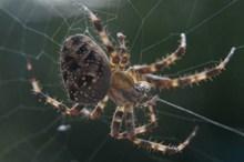 大蜘蛛近景图片