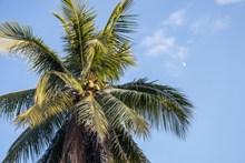 绿色棕榈图片大全