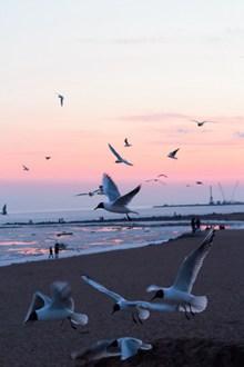沙滩上海鸥飞翔高清图片