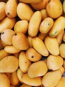 新鲜黄色芒果图片素材