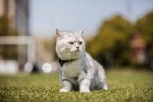 呆萌可爱宠物猫咪图片素材