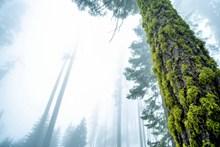 树干青苔图片下载