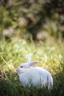 可爱小白兔高清高清图片