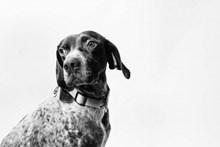 可爱黑白狗狗图片素材